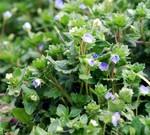 庭先の花2
